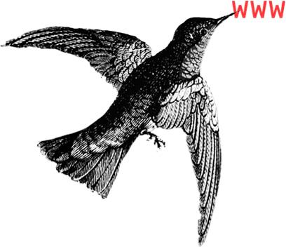 imagen de colibrí representando servico rediseños web