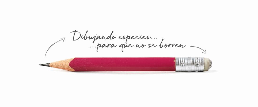 diseño de imagen promocional con slogan de Artimalia