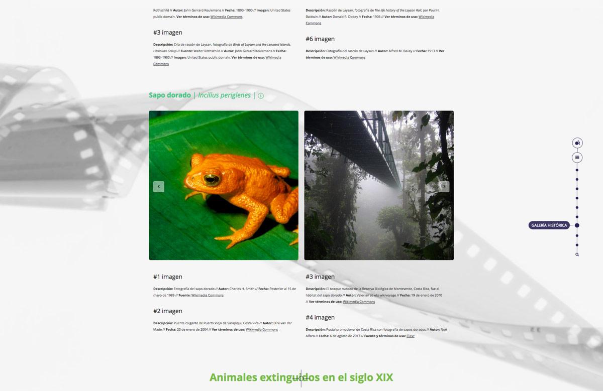 diseño de galería multimedia onteractiva para Artimalia