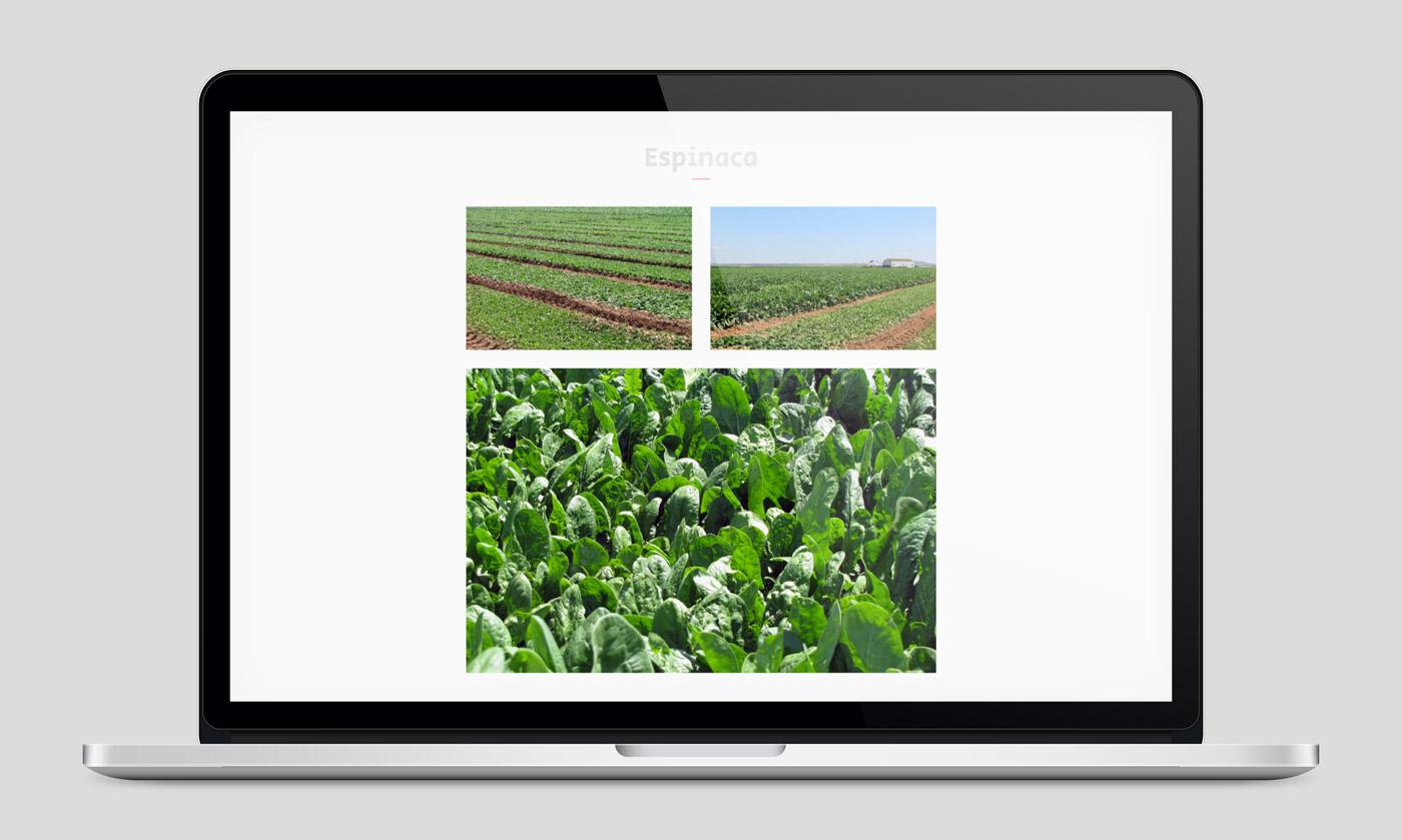 diseño de web sección álbum multimedia en portatil para Actiture
