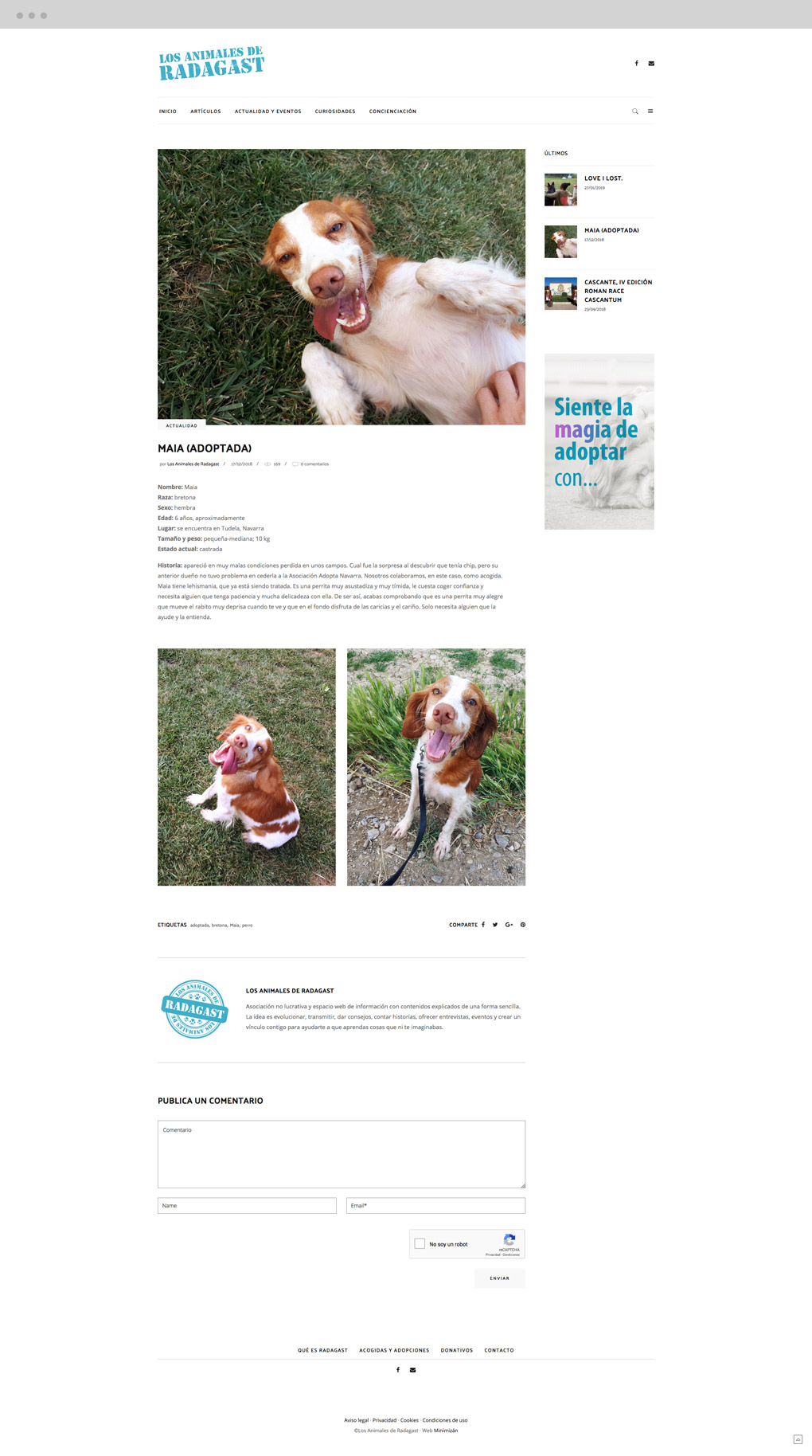presentación de diseño de magazine electrónico dedicado a los animales y la naturaleza pantalla de adopciones