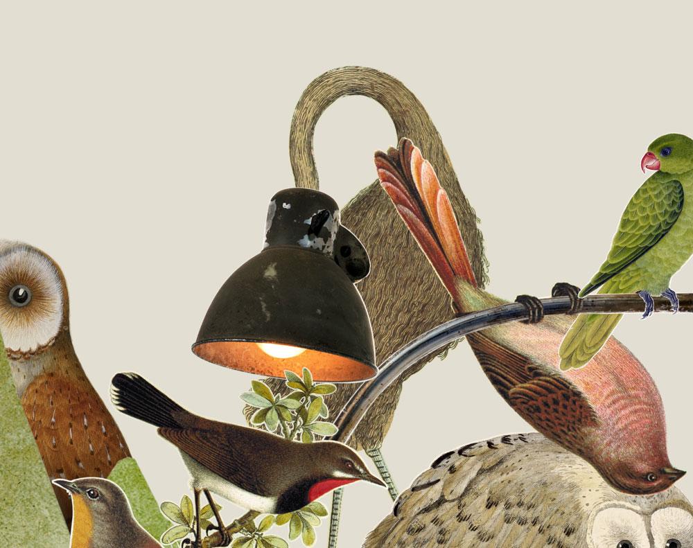 collages de aves de Amaya Oyón