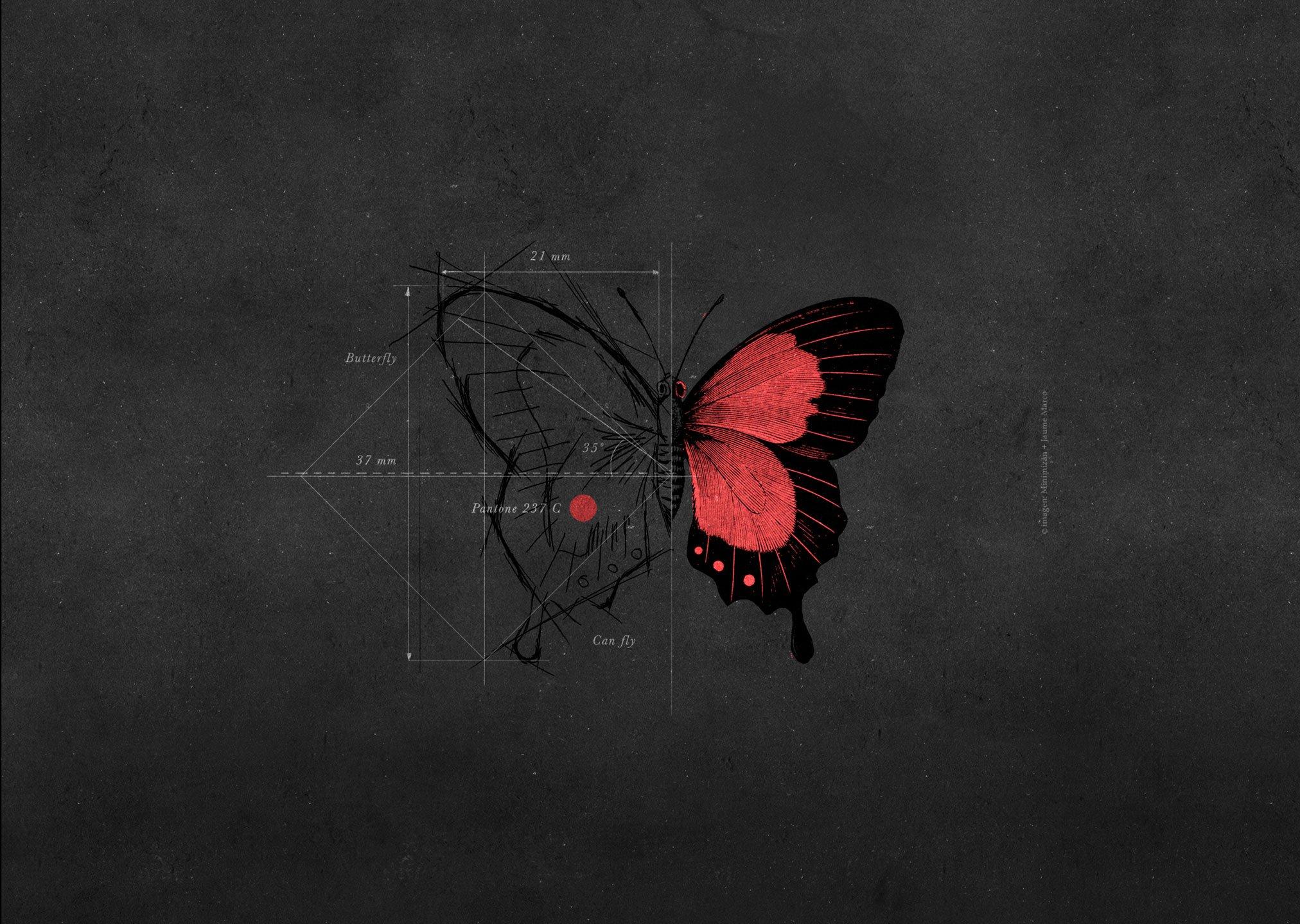 imagen de mariposa dibujada representando servico diseño de identidades visuales