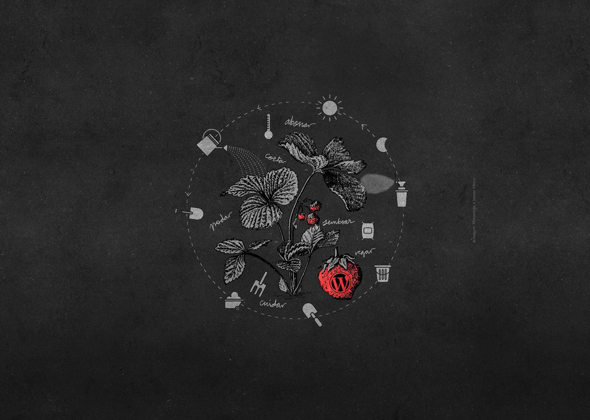 imagen de planta creciendo representando servico programación en WordPress